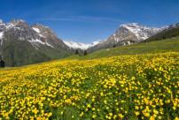 alpeBracciascia_fioriture